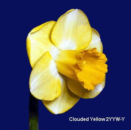 Cloudy Yellow, 2YYW-Y (23131 bytes)